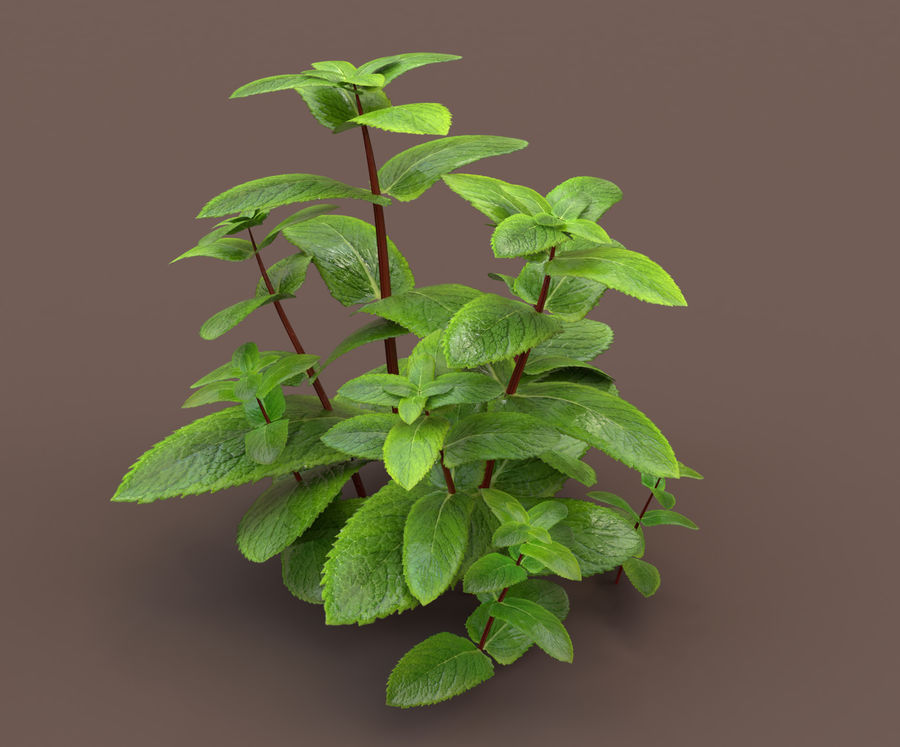 mint herb plants royalty-free 3d model - Preview no. 8