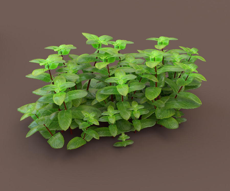 mint herb plants royalty-free 3d model - Preview no. 3