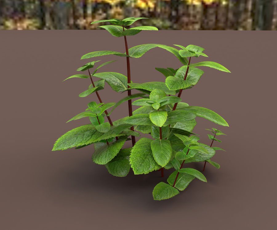 mint herb plants royalty-free 3d model - Preview no. 11