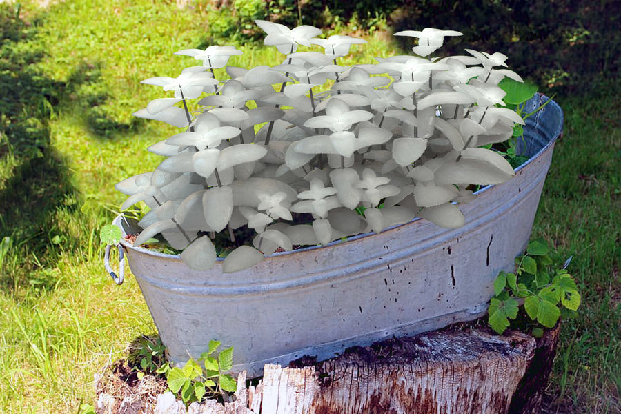 mint herb plants royalty-free 3d model - Preview no. 5