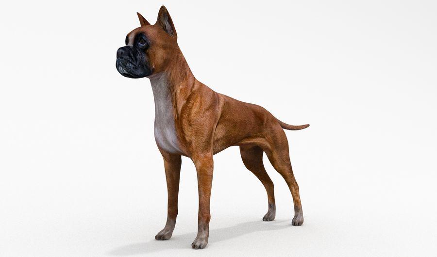 German Boxer Dog royalty-free 3d model - Preview no. 12