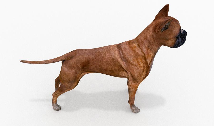 German Boxer Dog royalty-free 3d model - Preview no. 4