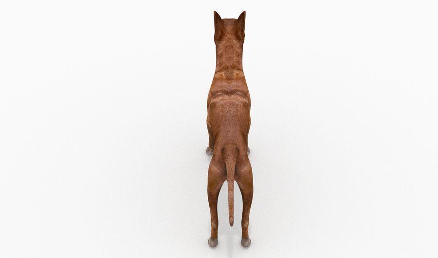 German Boxer Dog royalty-free 3d model - Preview no. 9