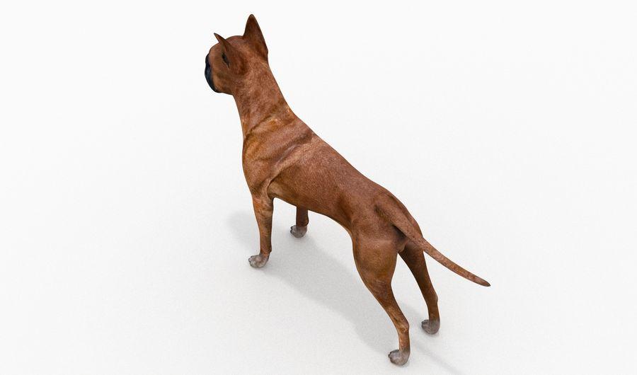 German Boxer Dog royalty-free 3d model - Preview no. 8