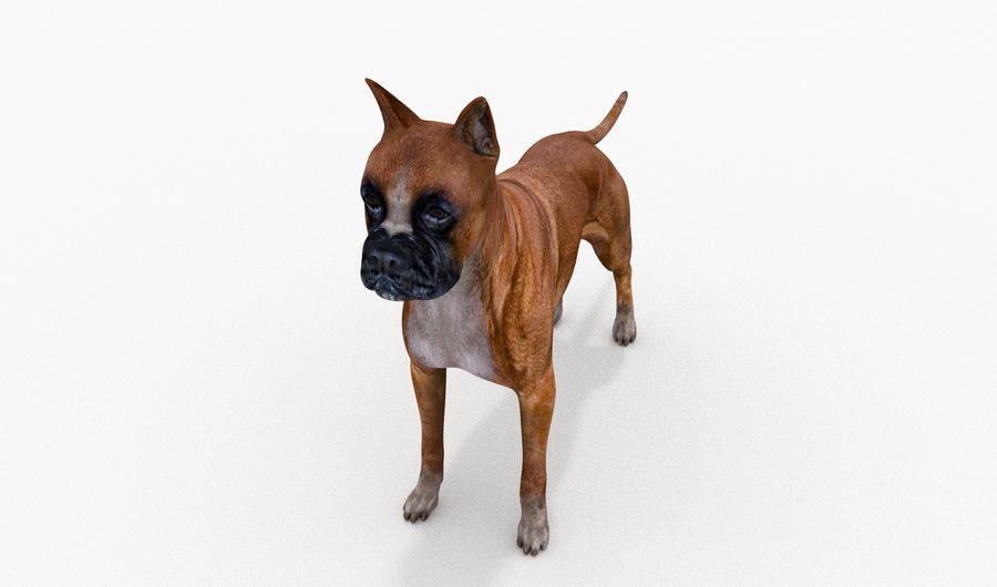 German Boxer Dog royalty-free 3d model - Preview no. 5
