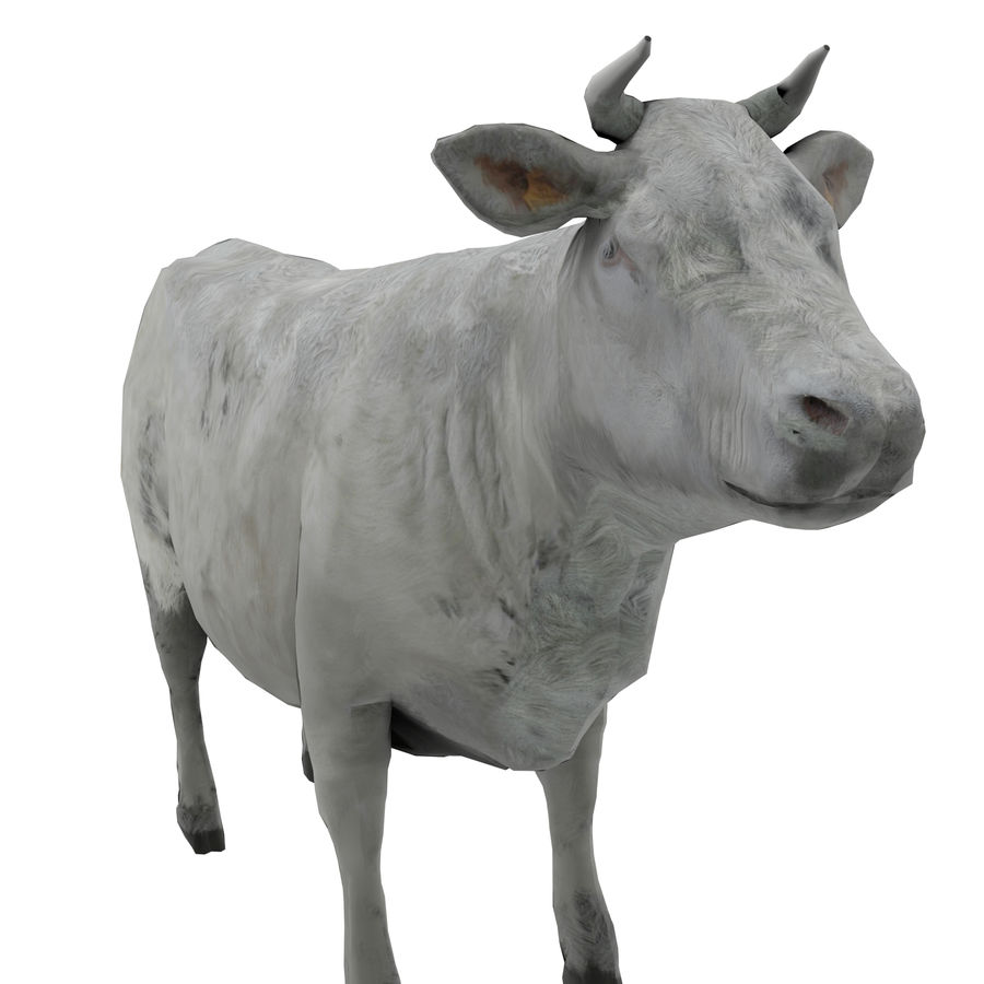 Cow Animated Rigged royalty-free 3d model - Preview no. 4
