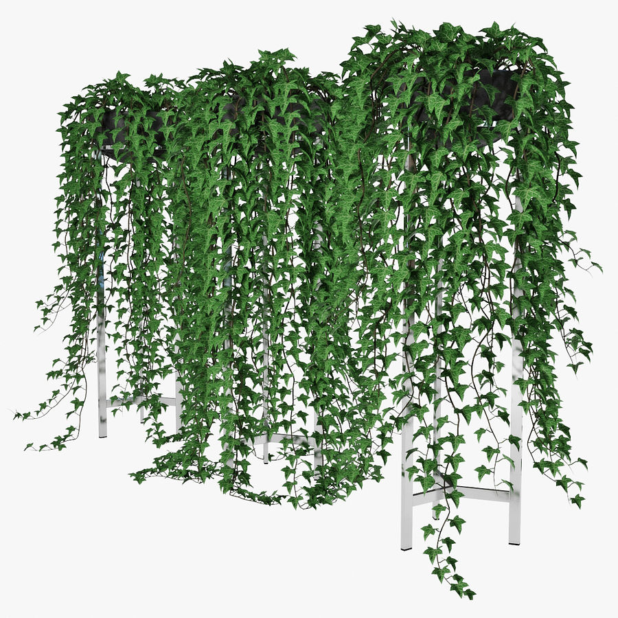 Ivy in pot 15 royalty-free 3d model - Preview no. 5