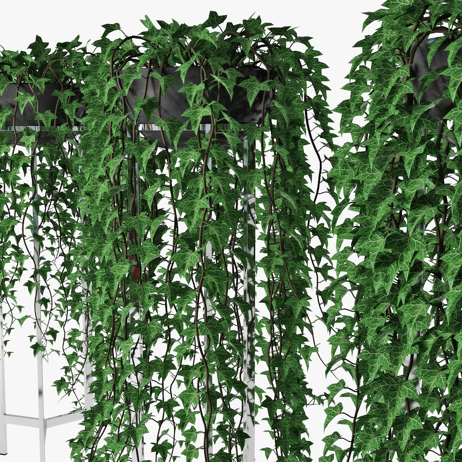 Ivy in pot 15 royalty-free 3d model - Preview no. 9