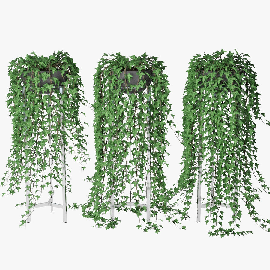 Ivy in pot 15 royalty-free 3d model - Preview no. 1