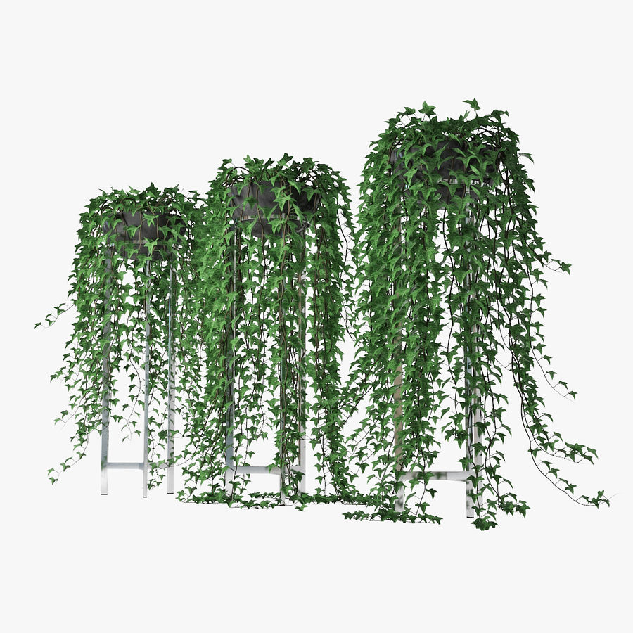Ivy in pot 15 royalty-free 3d model - Preview no. 2