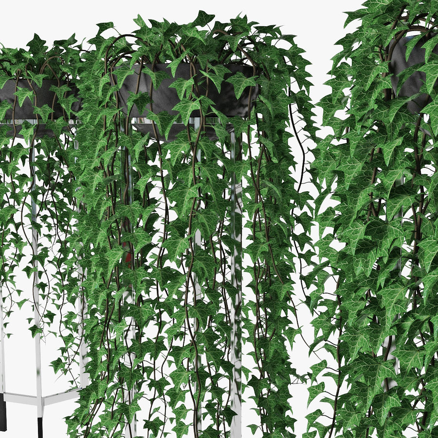 Ivy in pot 15 royalty-free 3d model - Preview no. 11