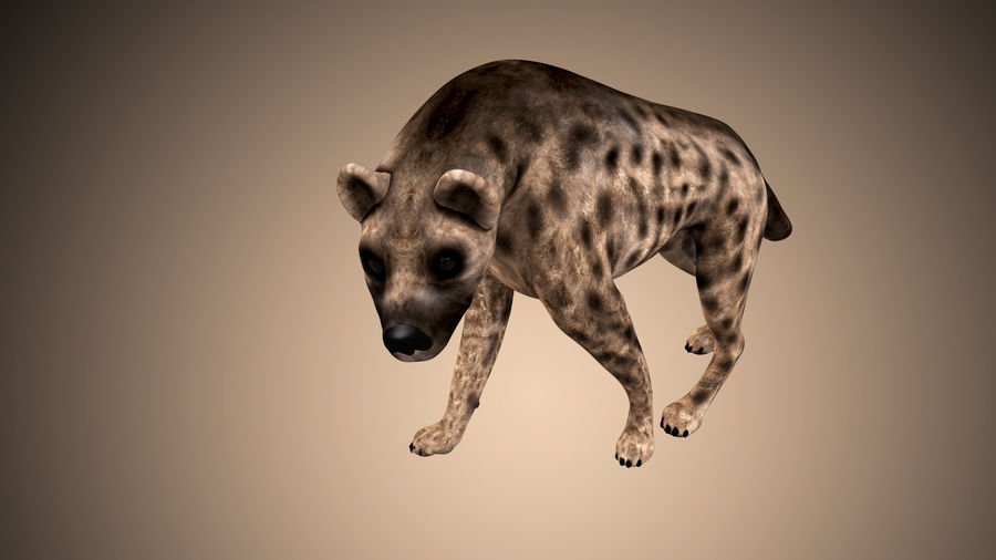 Realistic Rigged Low Poly Hyena royalty-free 3d model - Preview no. 1