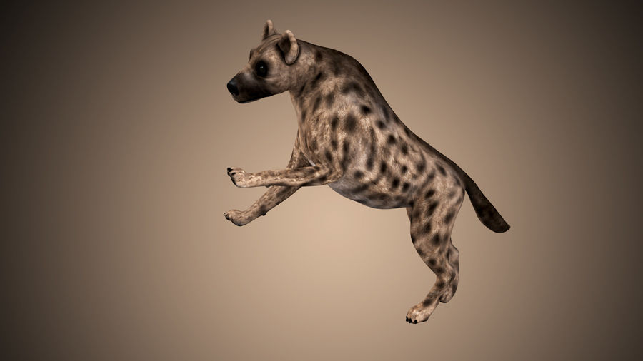 Realistic Rigged Low Poly Hyena royalty-free 3d model - Preview no. 4
