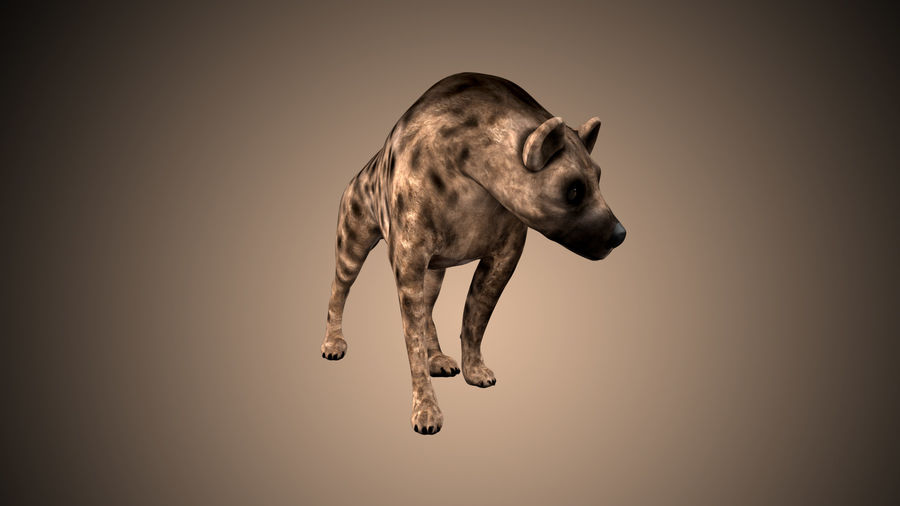 Realistic Rigged Low Poly Hyena royalty-free 3d model - Preview no. 2