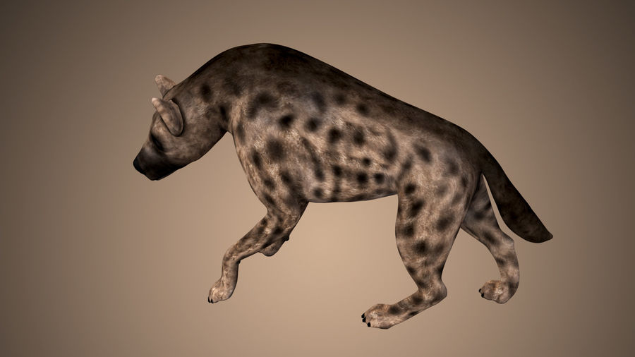 Realistic Rigged Low Poly Hyena royalty-free 3d model - Preview no. 5