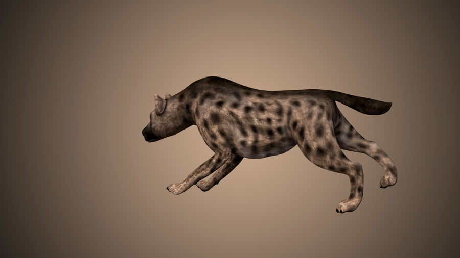 Realistic Rigged Low Poly Hyena royalty-free 3d model - Preview no. 3