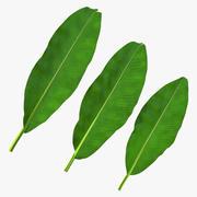 Листья бананового дерева 3d model