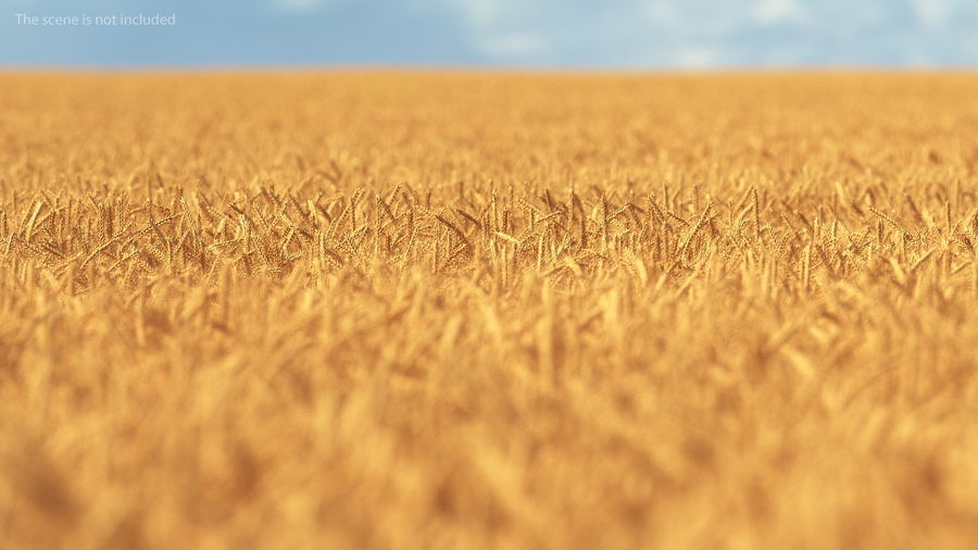 Buğday Tarlası Bölümü royalty-free 3d model - Preview no. 6