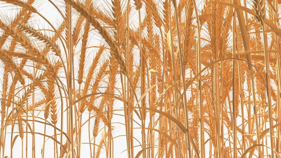 Buğday Tarlası Bölümü royalty-free 3d model - Preview no. 13