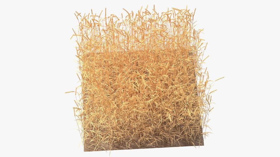 Buğday Tarlası Bölümü royalty-free 3d model - Preview no. 11
