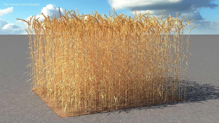 Buğday Tarlası Bölümü royalty-free 3d model - Preview no. 3