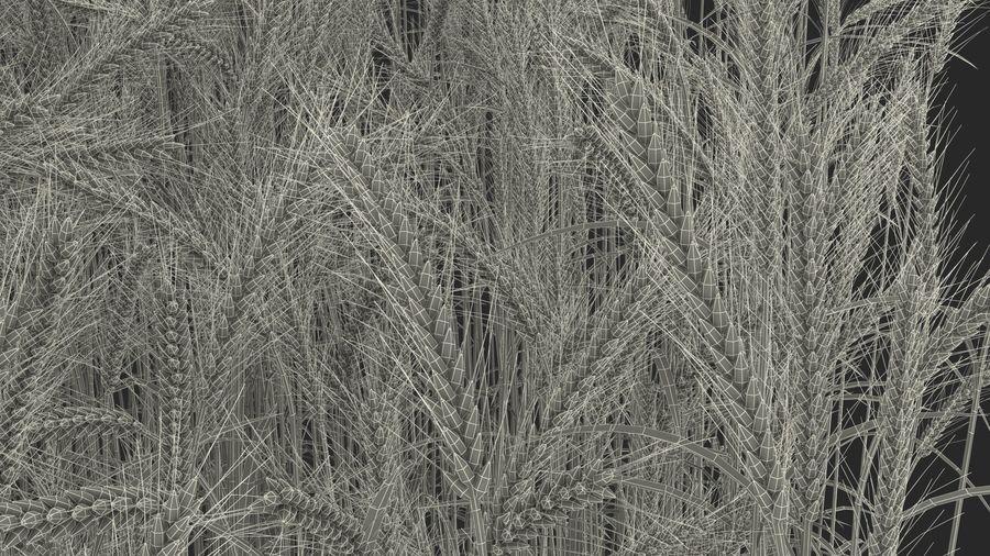 Buğday Tarlası Bölümü royalty-free 3d model - Preview no. 28