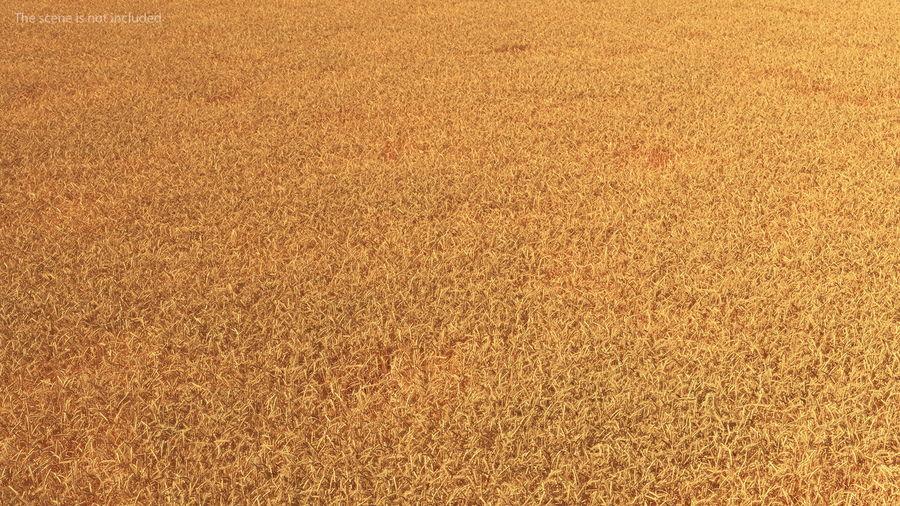 Buğday Tarlası Bölümü royalty-free 3d model - Preview no. 7