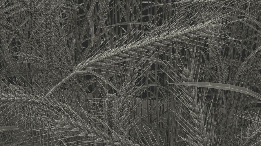Buğday Tarlası Bölümü royalty-free 3d model - Preview no. 29