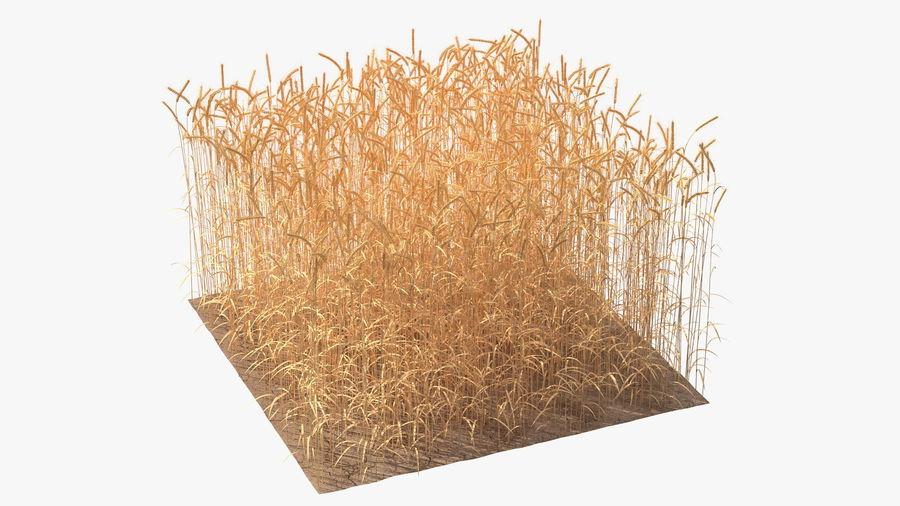Buğday Tarlası Bölümü royalty-free 3d model - Preview no. 2