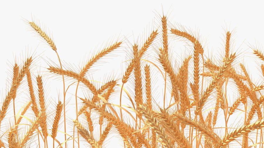 Buğday Tarlası Bölümü royalty-free 3d model - Preview no. 15