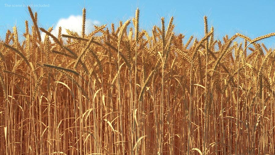 Buğday Tarlası Bölümü royalty-free 3d model - Preview no. 5