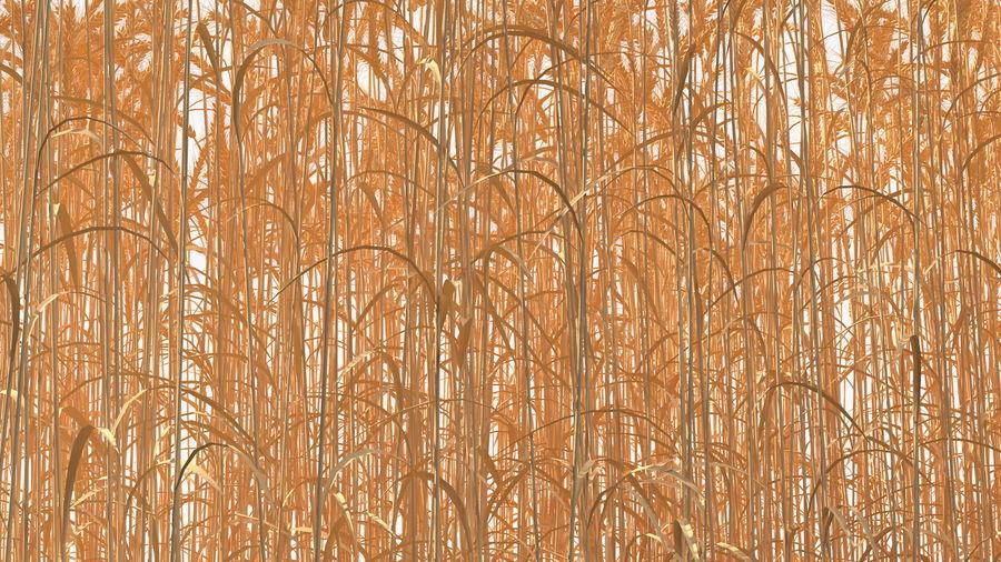 Buğday Tarlası Bölümü royalty-free 3d model - Preview no. 12