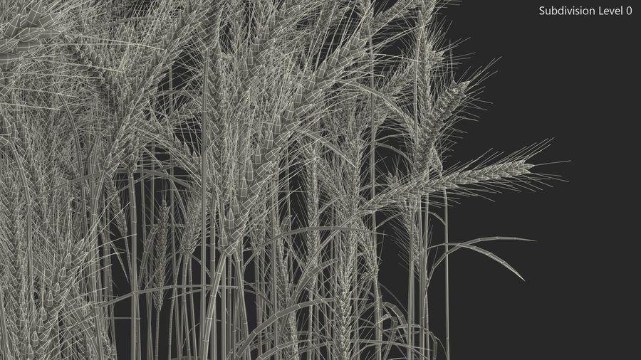 Buğday Tarlası Bölümü royalty-free 3d model - Preview no. 17