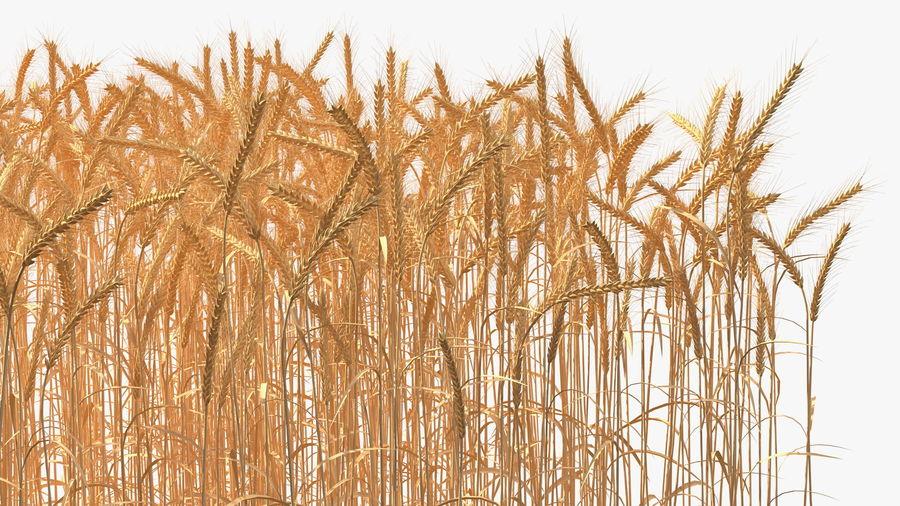 Buğday Tarlası Bölümü royalty-free 3d model - Preview no. 14