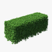 Boxwood Hedge 3d model