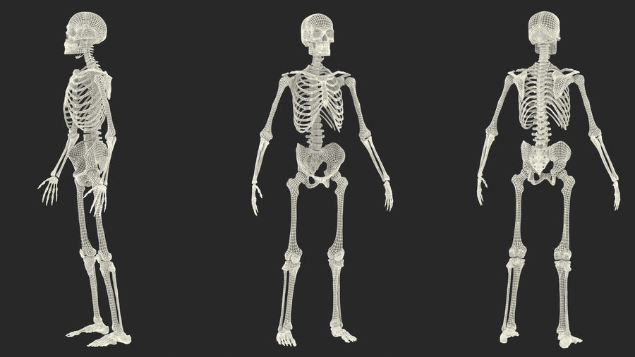 Male Body Anatomy Collection(1) royalty-free 3d model - Preview no. 57