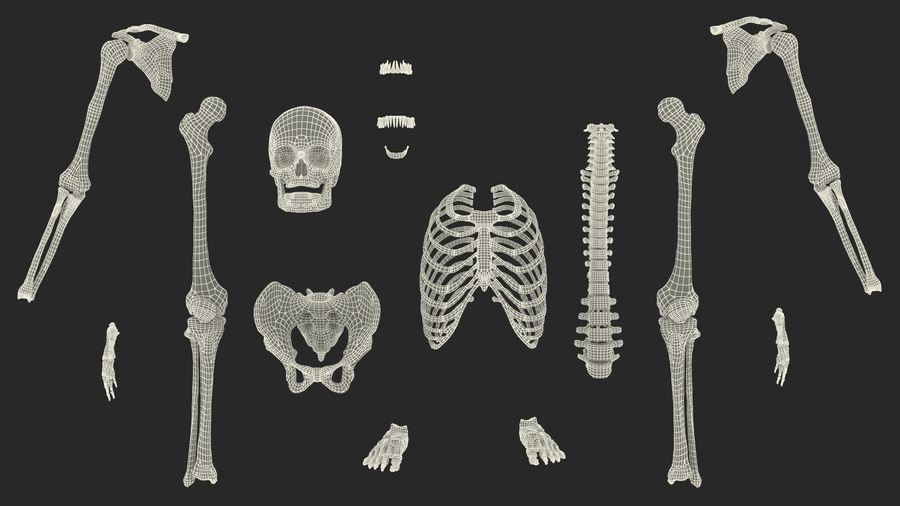 Male Body Anatomy Collection(1) royalty-free 3d model - Preview no. 58