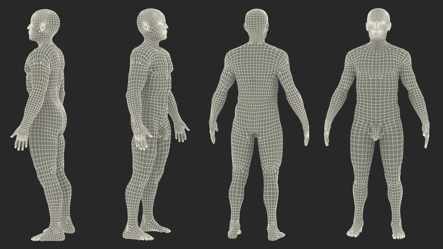 Male Body Anatomy Collection(1) royalty-free 3d model - Preview no. 54