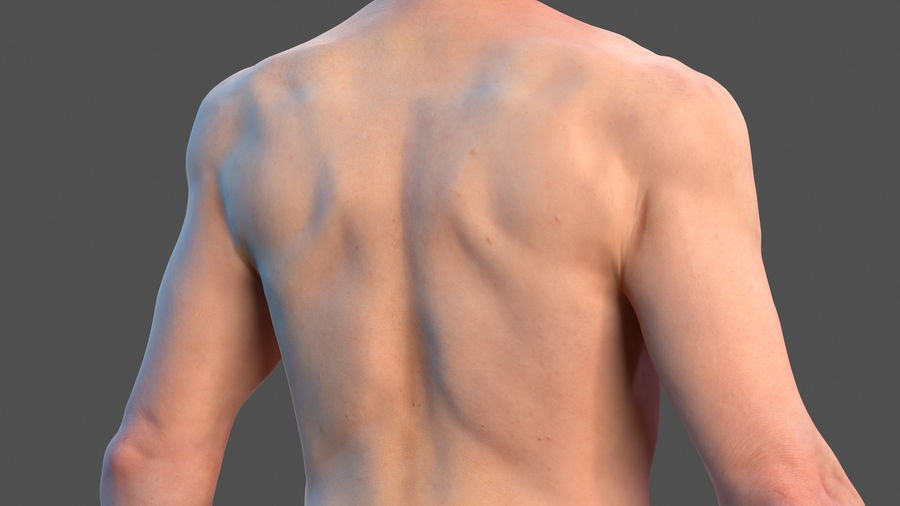 Male Body Anatomy Collection(1) royalty-free 3d model - Preview no. 10