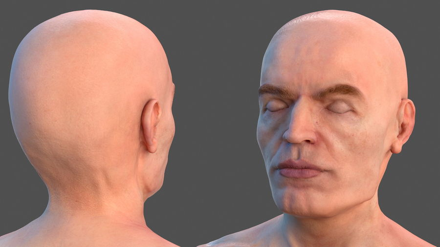 Male Body Anatomy Collection(1) royalty-free 3d model - Preview no. 9