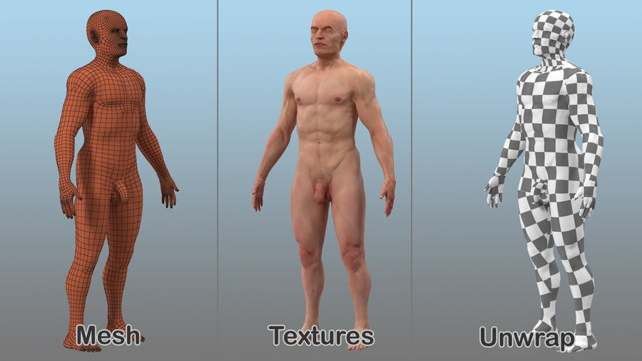 Male Body Anatomy Collection(1) royalty-free 3d model - Preview no. 8