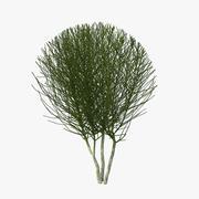 Arbuste nu 3d model