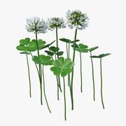 Blooming Clover Field Meadow 3d model
