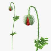 Цветок Мака Бутон 3d model