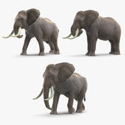 Animated Elephants Collection 3d model
