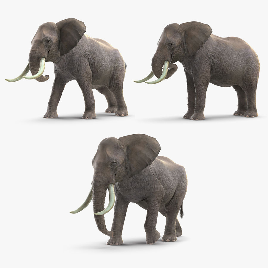 Animated Elephants Collection royalty-free 3d model - Preview no. 1