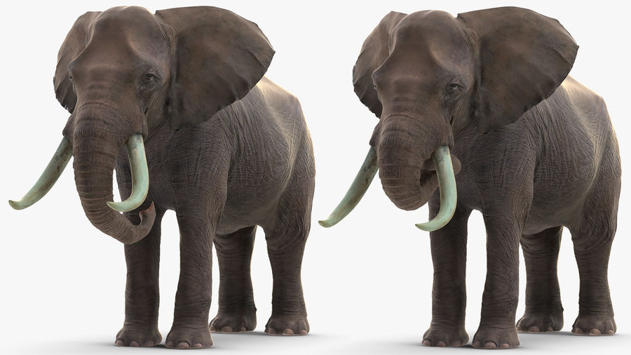 Animated Elephants Collection royalty-free 3d model - Preview no. 15
