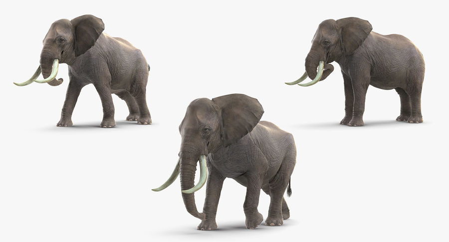 Animated Elephants Collection royalty-free 3d model - Preview no. 2