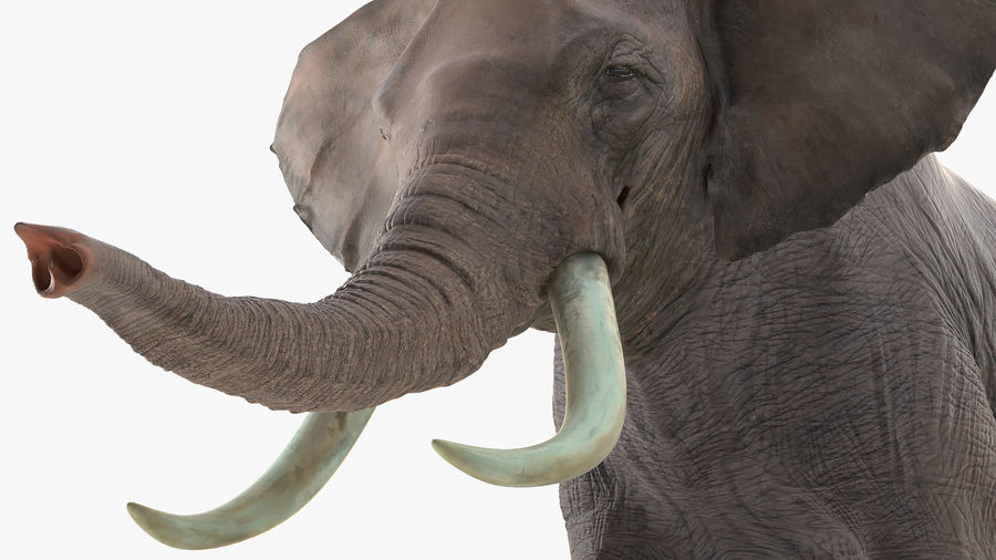 Animated Elephants Collection royalty-free 3d model - Preview no. 24