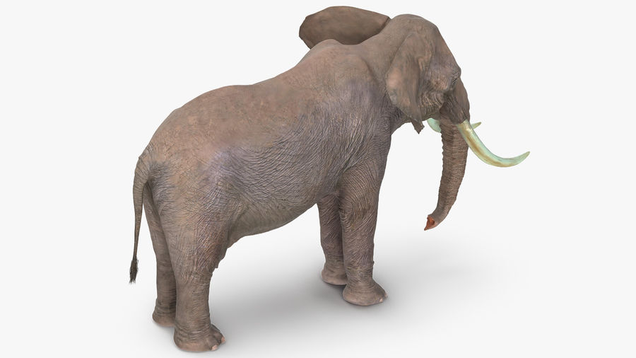 Animated Elephants Collection royalty-free 3d model - Preview no. 16